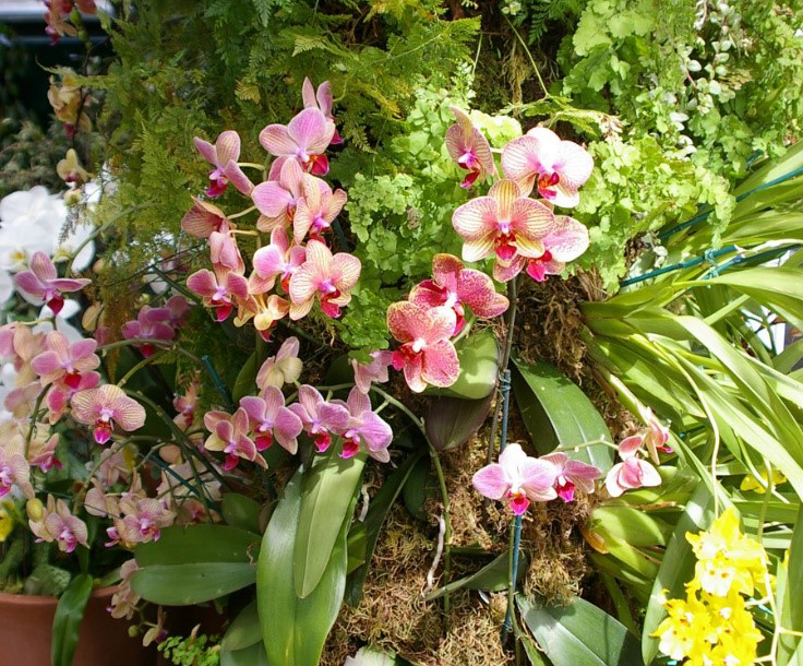 Tips To Get Your Orchid To Rebloom Womanswork Com